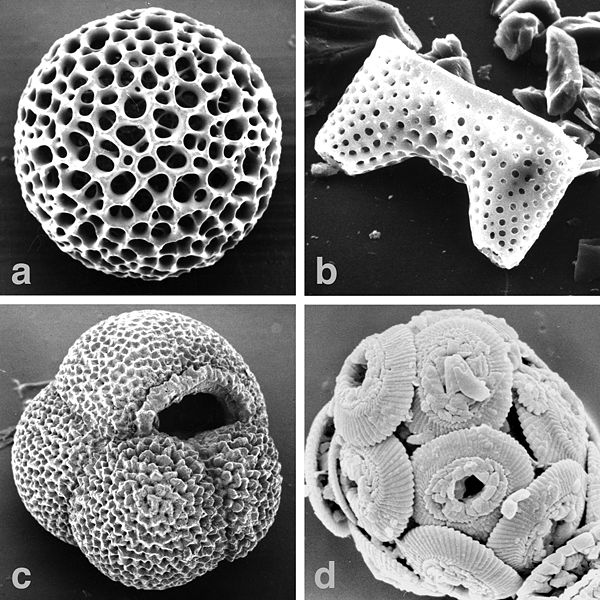 Marine-microfossils-major_hg.jpg